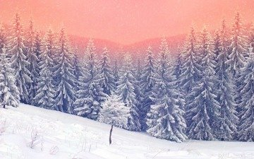 trees, nature, forest, sunset, winter, ate