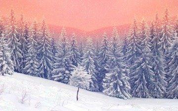 деревья, природа, лес, закат, зима, ели