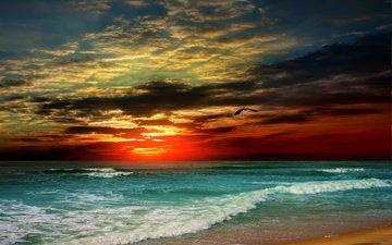the sky, clouds, shore, wave, sunset, sea, sand, beach, bird, tropics