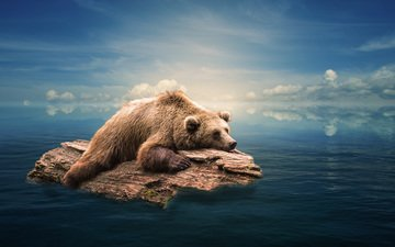 the sky, art, clouds, water, sea, bear, log