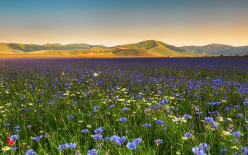 flowers, mountains, nature, landscape, field, chamomile, cornflowers, wildflowers