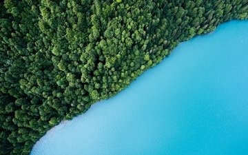 trees, water, lake, greens, forest, the view from the top