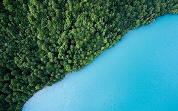 деревья, вода, озеро, зелень, лес, вид сверху