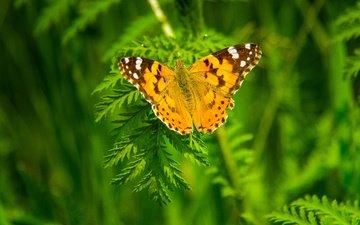 растения, насекомое, бабочка, крылья, размытость