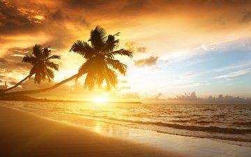облака, закат, море, пляж, пальмы, океан, солнечный свет
