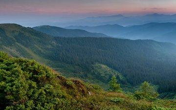 grass, mountains, plants, forest, carpathians