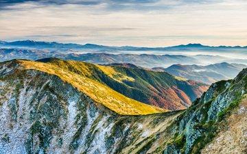 горы, природа, пейзаж, мох, карпаты