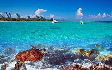 природа, море, яхты, остров, тропики, 13