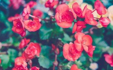 цветы, лепестки, красные, орхидеи