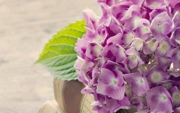 цветы, книги, соцветие, гортензия