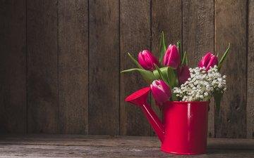 цветы, тюльпаны, лейка