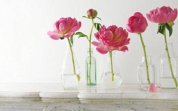 лепестки, бутон, розовые, стебли, бутылки, пионы, вазы, композиция