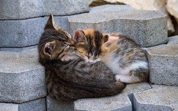 сон, улица, кошки, котята, мордочки