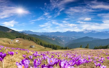 the sky, flowers, clouds, mountains, forest, spring, crocuses, sunny