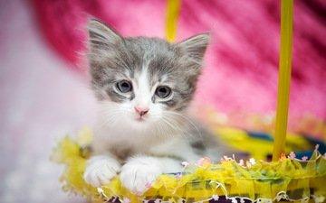 кот, мордочка, усы, кошка, взгляд, котенок, корзинка