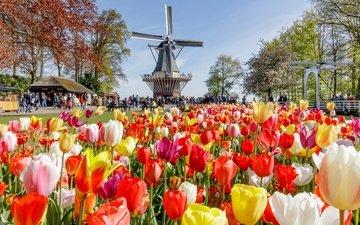 цветы, деревья, солнце, парк, люди, разноцветные, мельница, тюльпаны, нидерланды, народ, keukenhof
