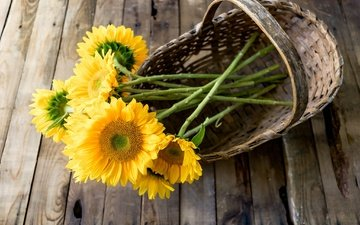 flowers, petals, sunflower, bouquet, basket, sunflowers, wooden surface