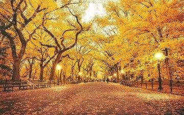 деревья, фонари, листья, парк, люди, осень, скамейки, аллея, лавки