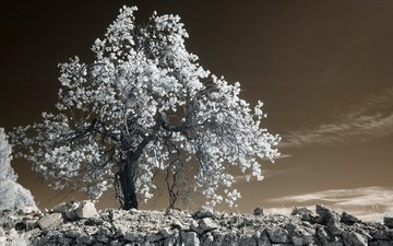 tree, stones, leaves, france, provence, infrared the