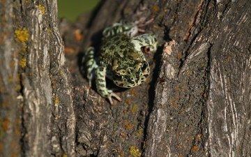 tree, frog, bark