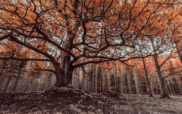 деревья, дерево, лес, ветки, ветви, осень