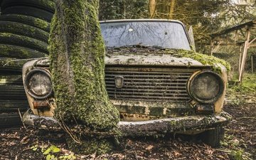 tree, auto, moss, scrap, lada
