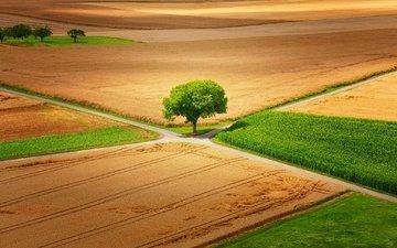 природа, дерево, пейзаж, поле, дороги, германия, little♥krawler, гессен
