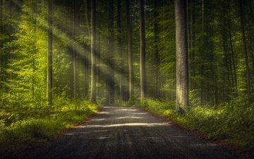 road, trees, forest, trunks, rays of light