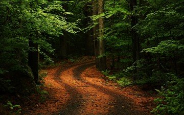 road, trees, nature, greens, forest, turn