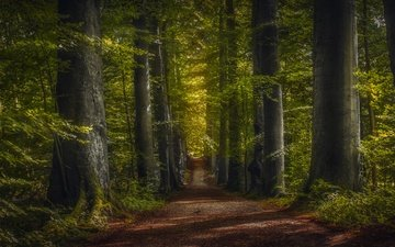 road, trees, greens, forest, trunks