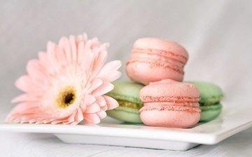 цветы, сладкое, печенье, выпечка, десерт, гербера, макаруны