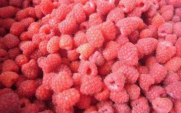 малина, лето, ягоды