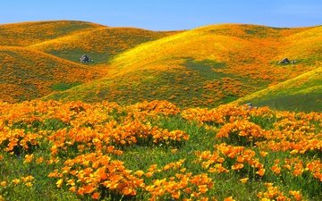 the sky, flowers, hills, maki, usa, antelope valley california poppy reserve, reserve