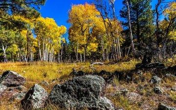 the sky, trees, stones, forest, birch, autumn, grove, aspen