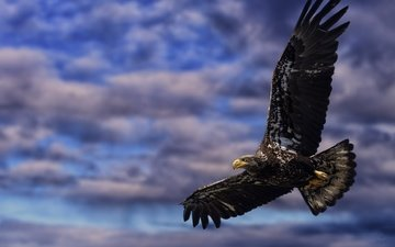 the sky, clouds, flight, wings, eagle, bird, beak, feathers