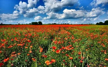the sky, flowers, clouds, field, horizon, red, maki