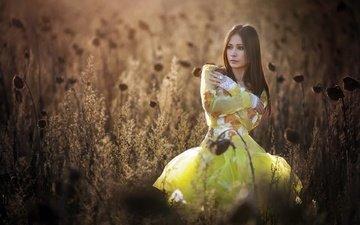 природа, растения, девушка, лето, взгляд, волосы, лицо, желтое платье