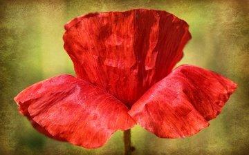 nature, macro, flower, petals, mac