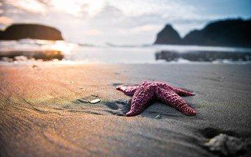 скалы, берег, море, песок, пляж, блики, морская звезда