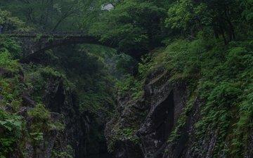 деревья, скалы, лес, мост, ущелье, растительность