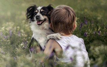 мордочка, взгляд, собака, дети, ребенок, мальчик, полевые цветы, дружба
