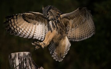 owl, nature, flight, wings, profile, bird