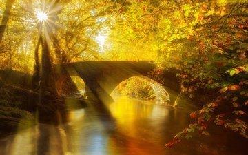 свет, деревья, река, солнце, лес, лучи, парк, мост, осень
