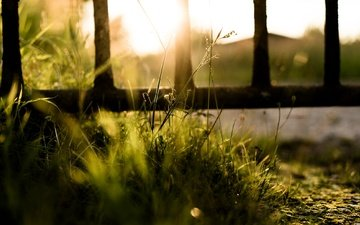 light, grass, nature, the fence