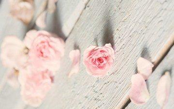 роза, лепестки, доски