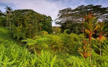 деревья, зелень, кусты, пальмы, сша, тропики, джунгли, гавайи