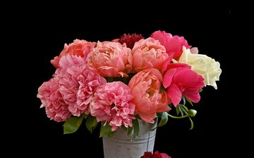 flowers, petals, black background, bouquet, peonies, bucket