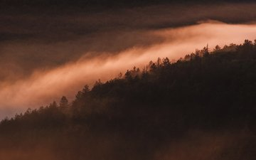 the sky, trees, nature, forest, fog, dawn