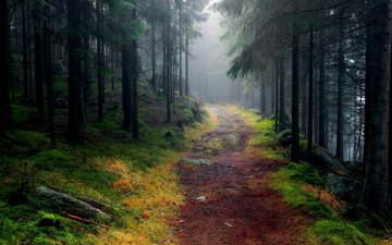 road, trees, forest, fog, path