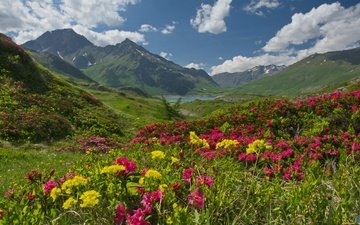 the sky, flowers, clouds, lake, mountains, france, plateau, alps, rhododendrons, savoie, mont cenis, haute-maurienne
